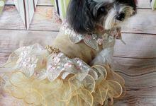 Fairy Theme Wedding by PetQuisite