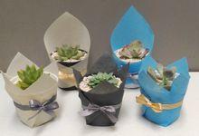 Souvenir wrapping planter tanaman sukulen & kaktus by Ohana Plants