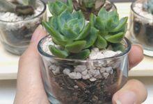 Souvenir glass planter tanaman sukulen & kaktus by Ohana Plants