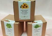 Souvenir Growing Kit DIY tanaman by Ohana Plants
