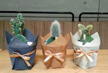 Wrapping planter tanaman kaktus dan sukulen by Ohana Plants