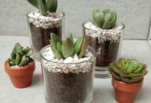 Souvenir glass planter tanaman kaktus dan sukulen by Ohana Plants