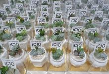 Souvenir for ICIO by Ohana Plants