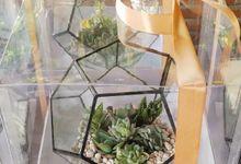 Souvenir for PT. SC Johnson by Ohana Plants