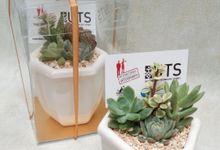 Souvenir for University Technology of Sydney by Ohana Plants