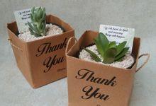 Paper Bag by Ohana Plants