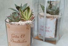 Medium Glass Planter by Ohana Eco Souvenir