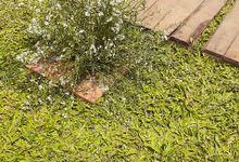 outdoor weeding by Temu Putih Decor