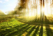 hutan by sunlight