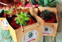 Sukulen PaperBag by My Garden Gift