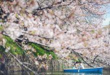 Ferry & Vania by Cappio Photography