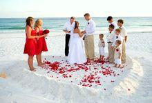 Ready Stock Rose Petal by Princess Wedding4u