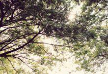 KALISTA & TEDDY by Raffles Hills Cibubur - On Green Garden Venue