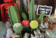 Preety Succulents by The Wedding Shop