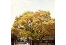 Korea In Autumn by Kencana Art Photo & Videography