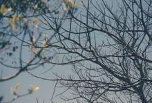 Portfolio by Aji Mahareshi Photography