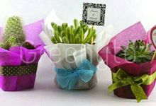 Wedding Souvenir by Colours Florist