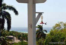 Destination Wedding in Jamaica by Hummingbird Hall Jamaica