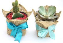 Cactus & Succulent by Book.Idea
