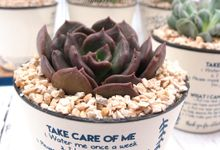 Cactus Plant Include Clear box & Personalised Label by Fine Souvenir