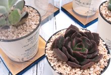 Cactus Plants Include Personalised Label & Package by Fine Souvenir