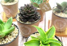 Cactus Plant Include Clear Box& Personalised Label by Fine Souvenir