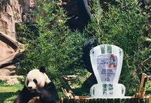 MC for Giant Panda Global Award by Demas Ryan & Lasting Moments Entertainment