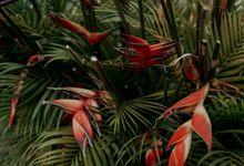 Botanical Decoration by kembaliDESA
