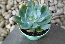 Cactus/Succulent, Plastic Pot Dia. 8-10 cm by House of Succulent