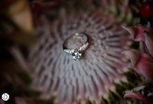 Brilliant Diamond Ring Fall Bridal Editorial by Ocampo's Fine Jewellery