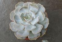 Premium Cactus & Succulent by House of Succulent