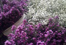 Supplier Bunga Potong Semi Holland by Talitakum flowers lembang