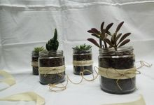 Succulent In a Jar 01 by Rhea