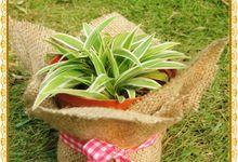 Plant Wedding Favor by Greenary Souvenir Tanamanku