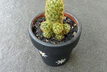 Cactus/Succulent ,Terracotta Pot Dia. 8 Cm by House of Succulent