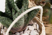 Succulent Souvenir in Rustic Basket Planter by Kopi dan Tanaman