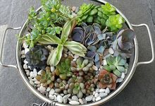 Terrarium by House of Succulent