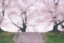 Masako & Joe  - Cherry Blossoms  in Kyoto by SuperPanda Presents