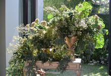 Conservatory Darling by PARC De AYODYA