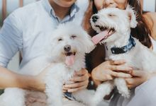 Doggies and Us by Bridelope Productions