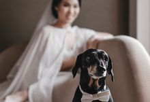 Andriesen & Anastasia - Wedding by Voyage Production