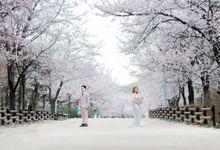 Prewedding C & E Cherryblossom  Korea Selatan by Luminance.pict
