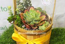 Sukulen Pot Kayu Timba by My Garden Gift