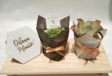Wrapping Planter (Khevin & Tari) cactus & succulent by Ohana Plants