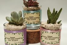 Glass planter (Aleeya) cactus & succulent by Ohana Plants