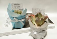 Wrapping Planter (Viona &  Darmawan) cactus & succulent by Ohana Plants