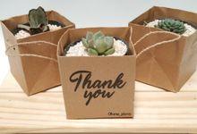 Paper Bag Tanaman Kaktus dan Sukulen by Ohana Plants