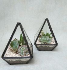 Mini Terrarium by Ohana Eco Souvenir