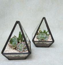 Mini Terrarium by Ohana Plants