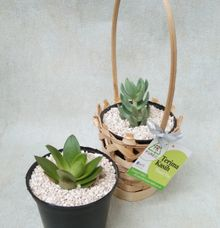 Bamboo Planter by Ohana Plants